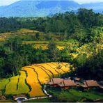 INDONESIE -22- Ile de Bali