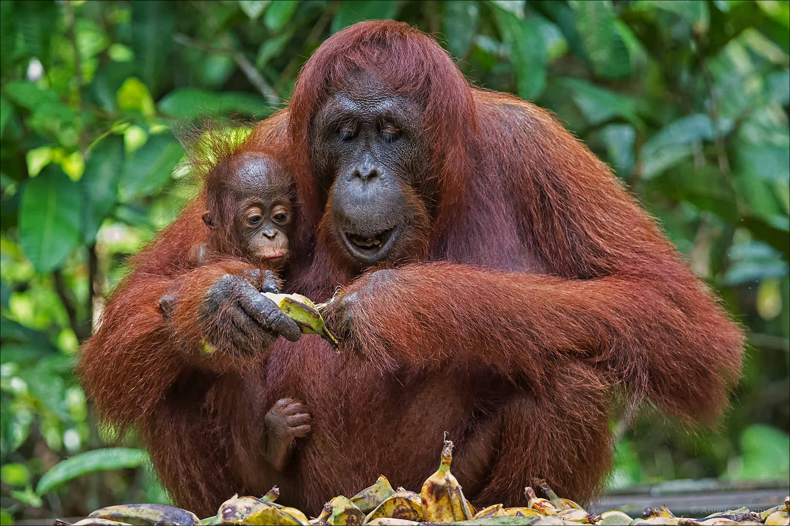 Indonesien [23] - Die Banane