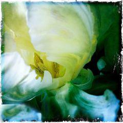 indoor flowers #2