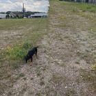 Industriekultur Hattingen: Hund steht da, während der Panoramaversuch missglückt.