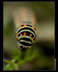 Infinite caterpillar
