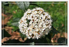 Inflorescencia blanca paseando en la GKM2