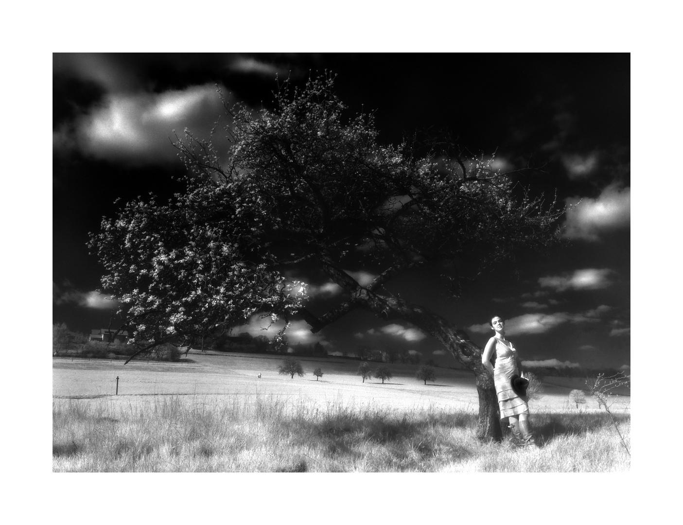Infrarot Aufnahme - Apfelbaum