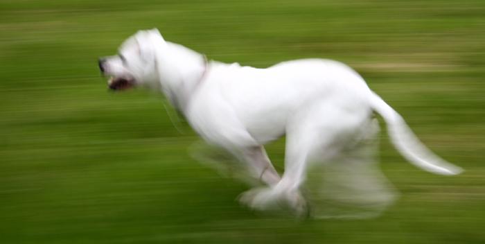 Inka auf Speed