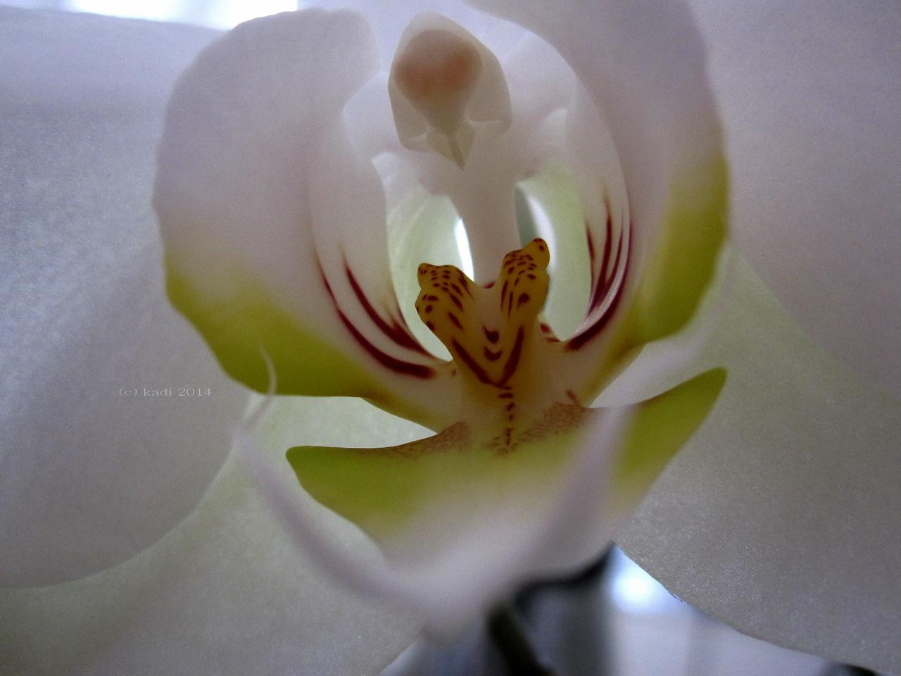 Innenleben einer Orchidee