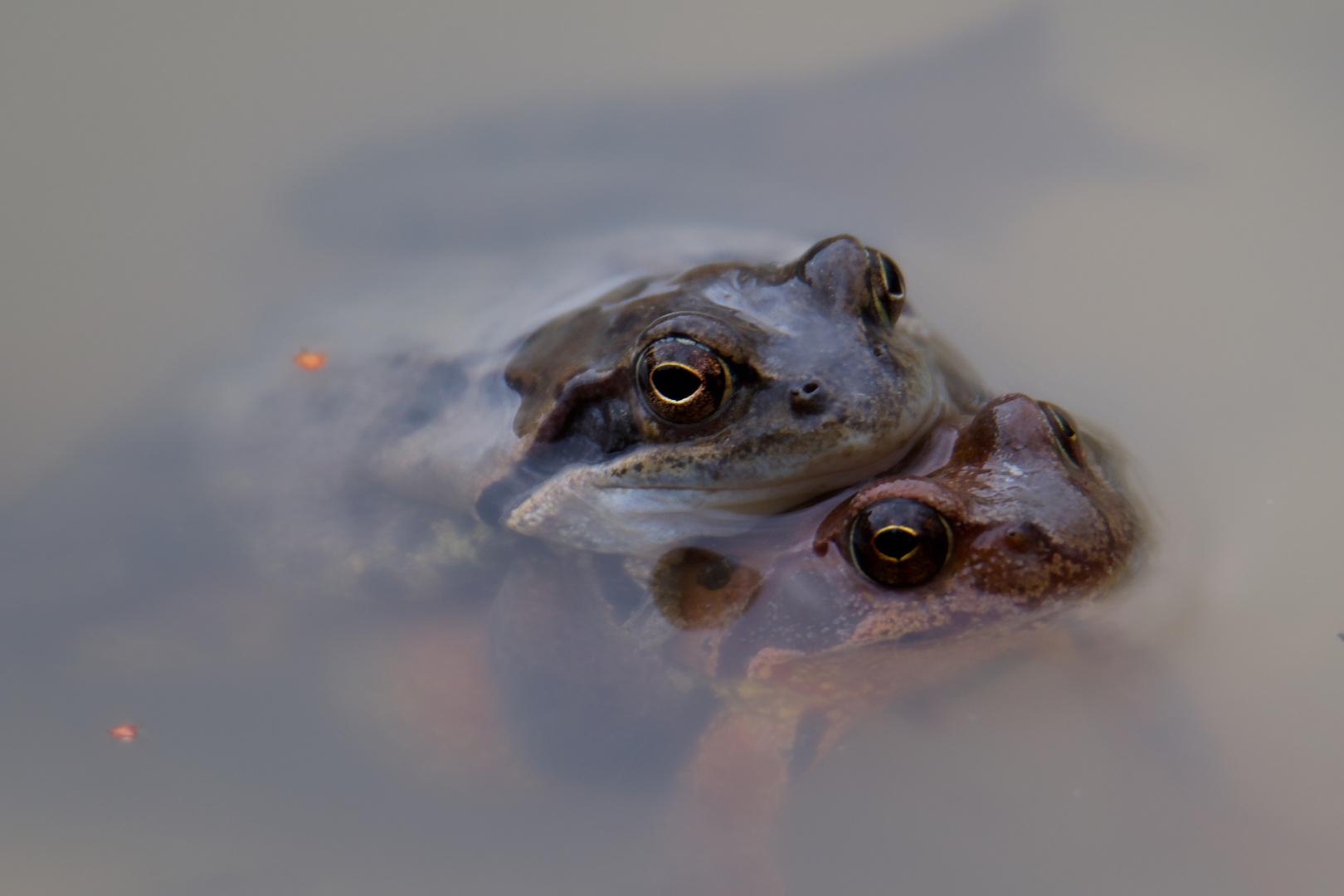 Innige Umarmung Foto & Bild   tiere, wildlife, amphibien