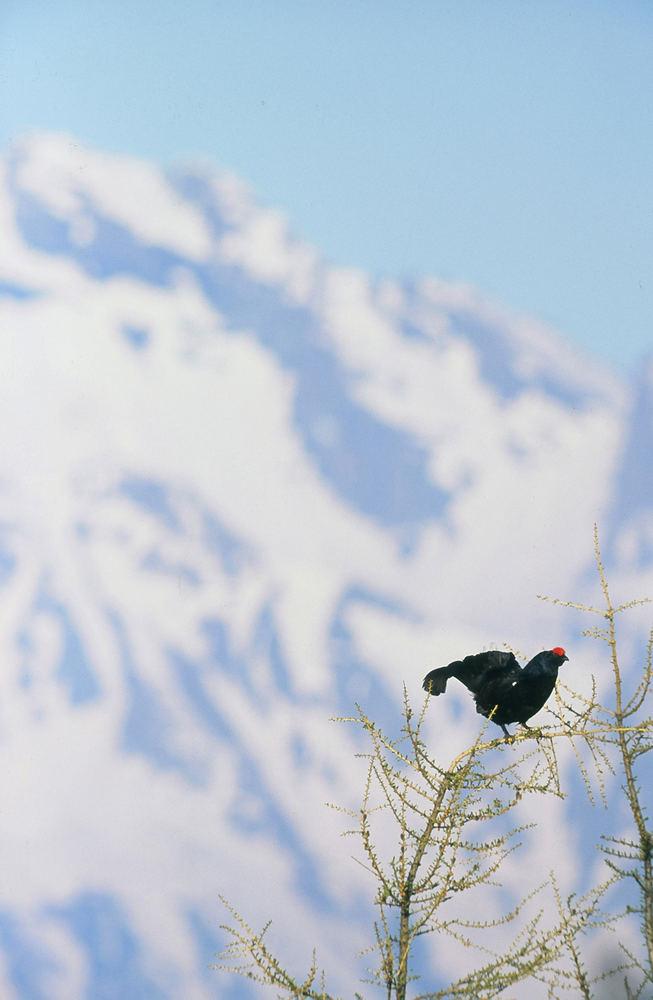 Inno di primavera foto immagini animali uccelli - Primavera uccelli primavera colorazione pagine ...