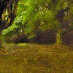 Inoltrarsi nel bosco centenario