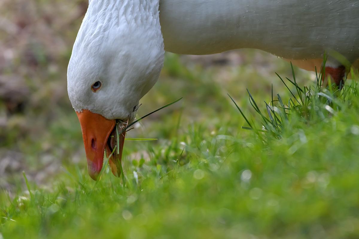 Ins Gras gebissen...