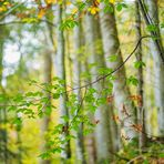 Ins Herbstlicht