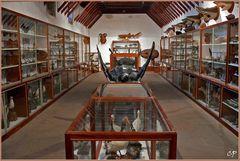 Ins Museum ...