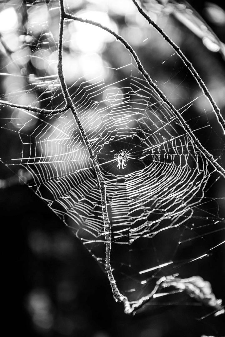Inse-Winse-Spinne ..wie lang dein Faden ist ..