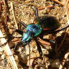 insecto multicolor..
