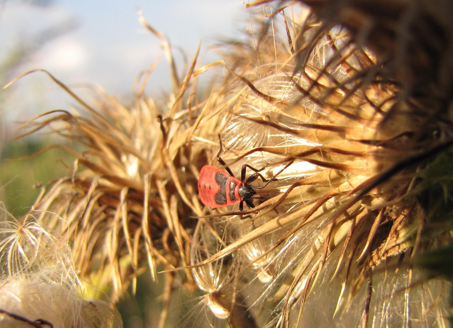 Insekt 02