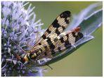 Insekt (2)