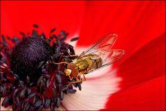 Insekt des Jahres