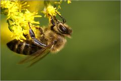 insekt f. michael :-)