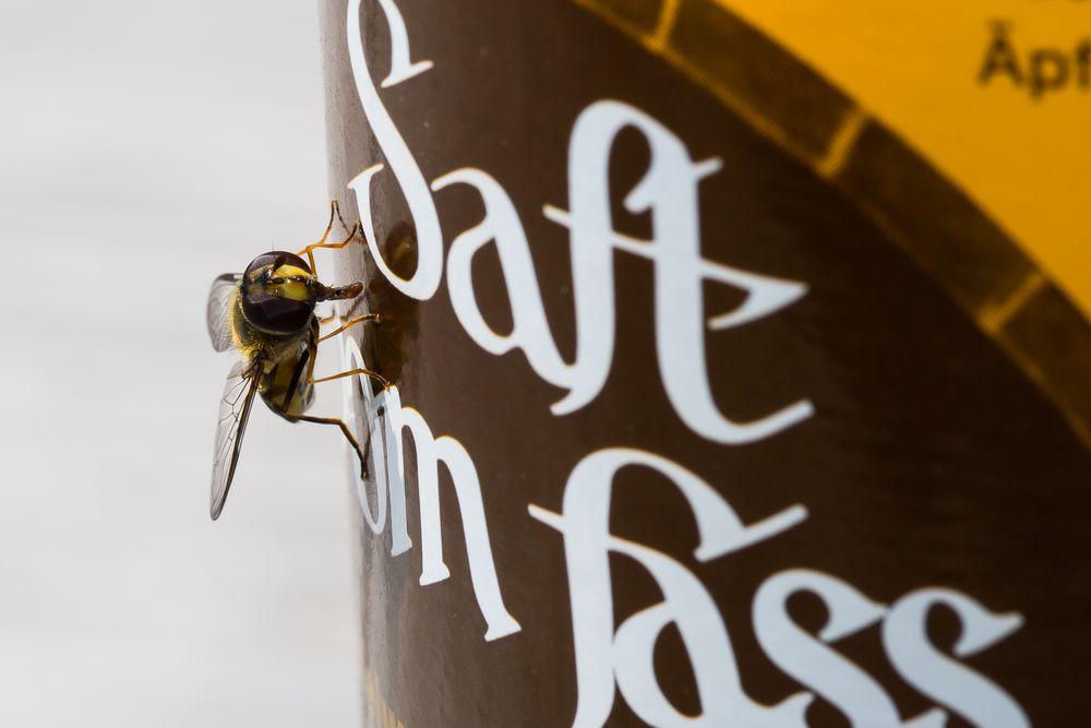 Insekt II