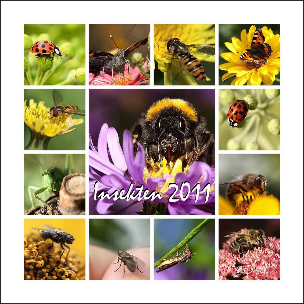 Insekten 2011