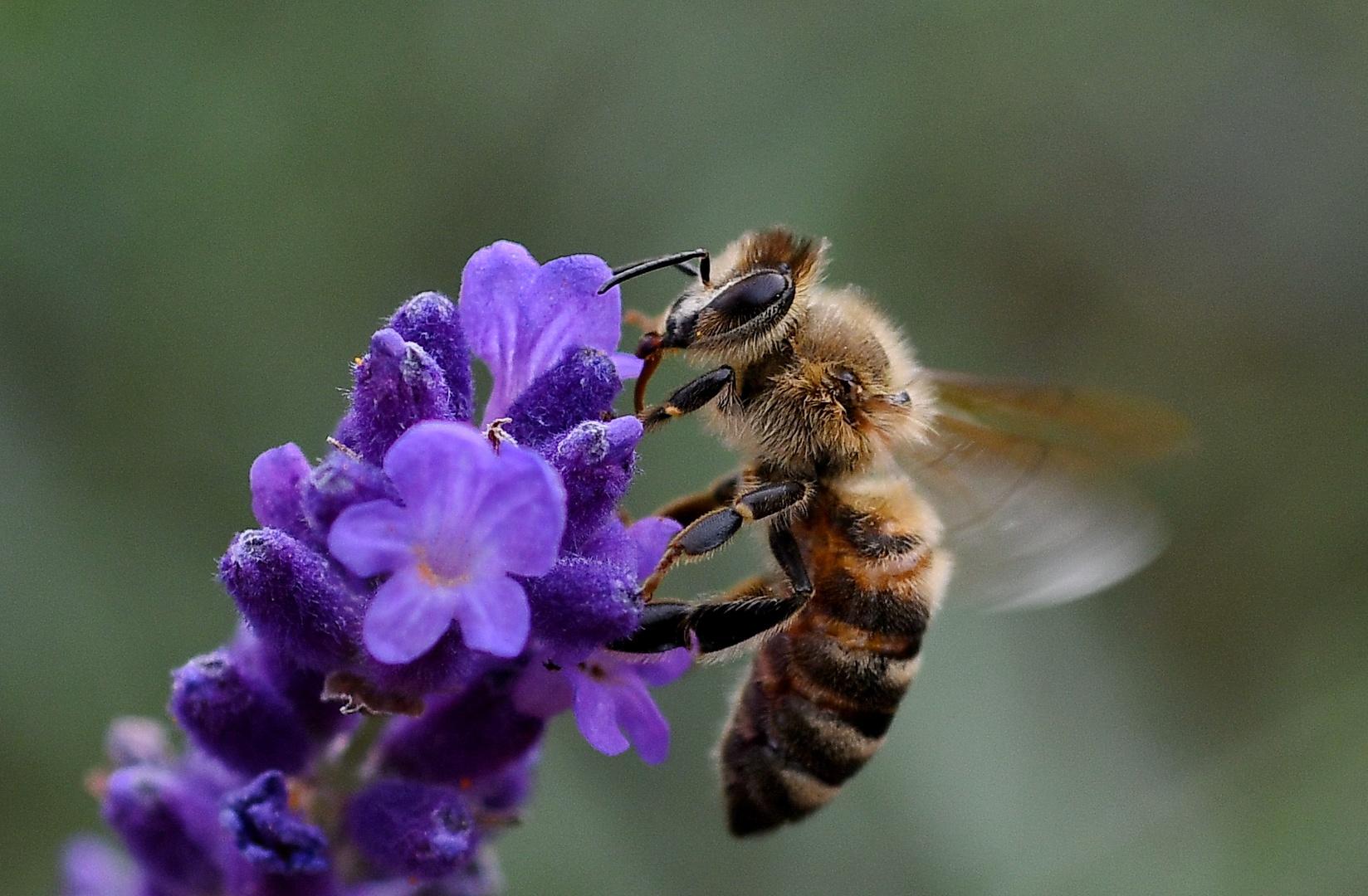 insekten foto  bild  tiere wildlife insekten bilder