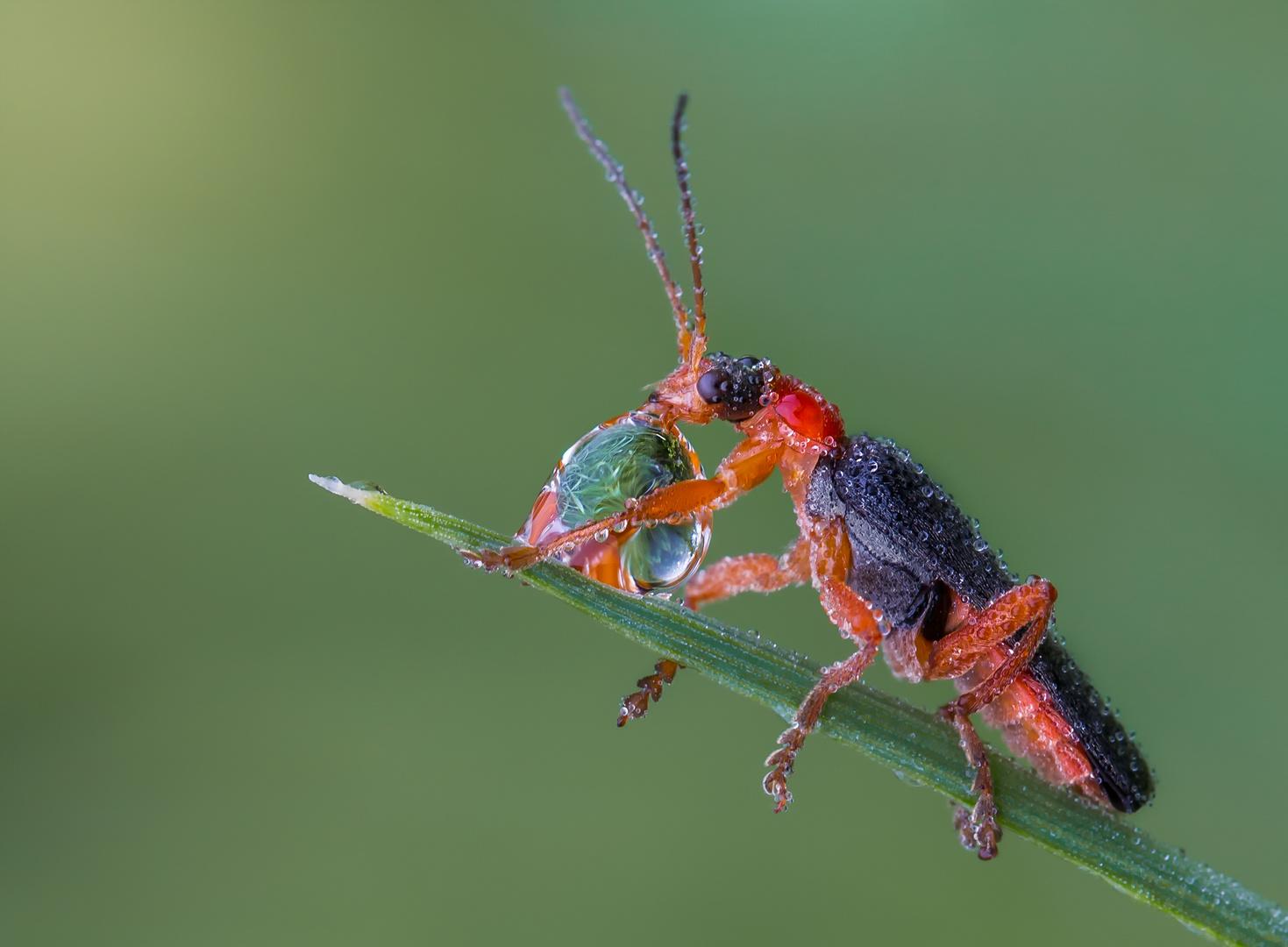 ...Insekten sind vom Aussterben...