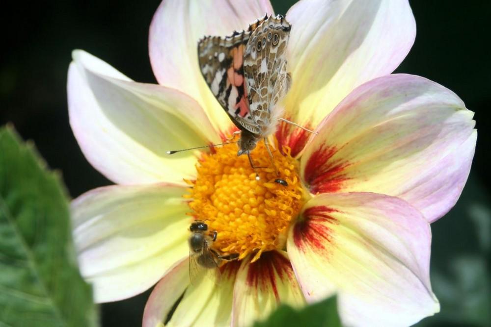 Insekten-Sommer-DriveIn