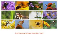 Insektenaufnahmen aus dem Jahr 2017