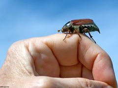 Insektenbefall