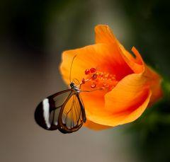 Insektenhunger