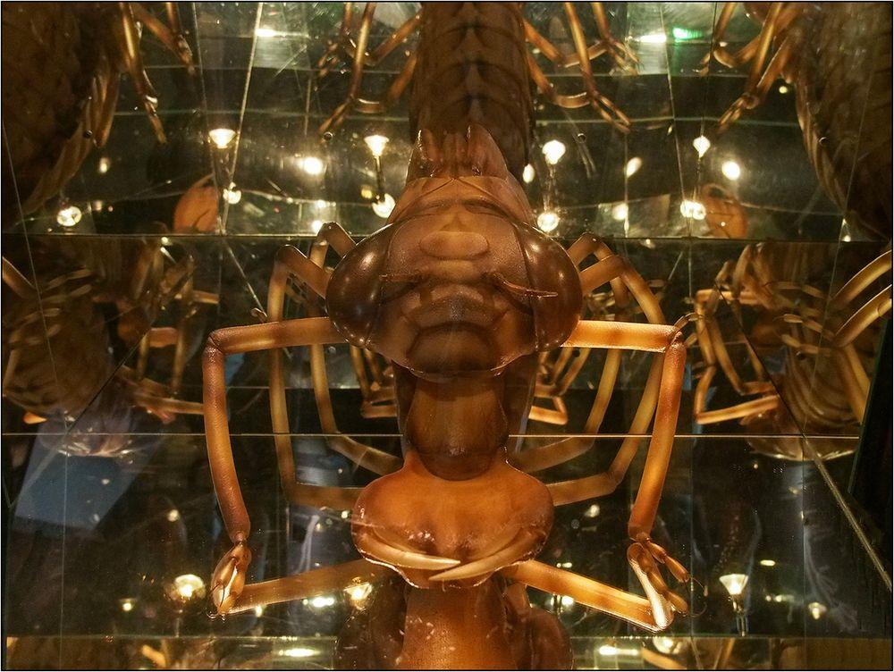 Insektenspiegelei
