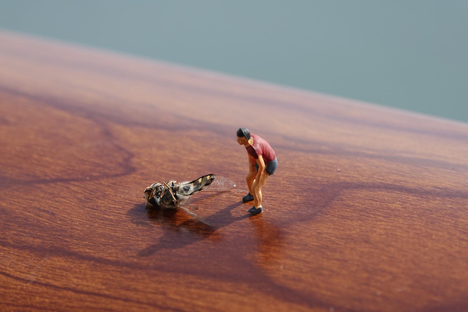 Insektentod auf Kreuzfahrtschiff