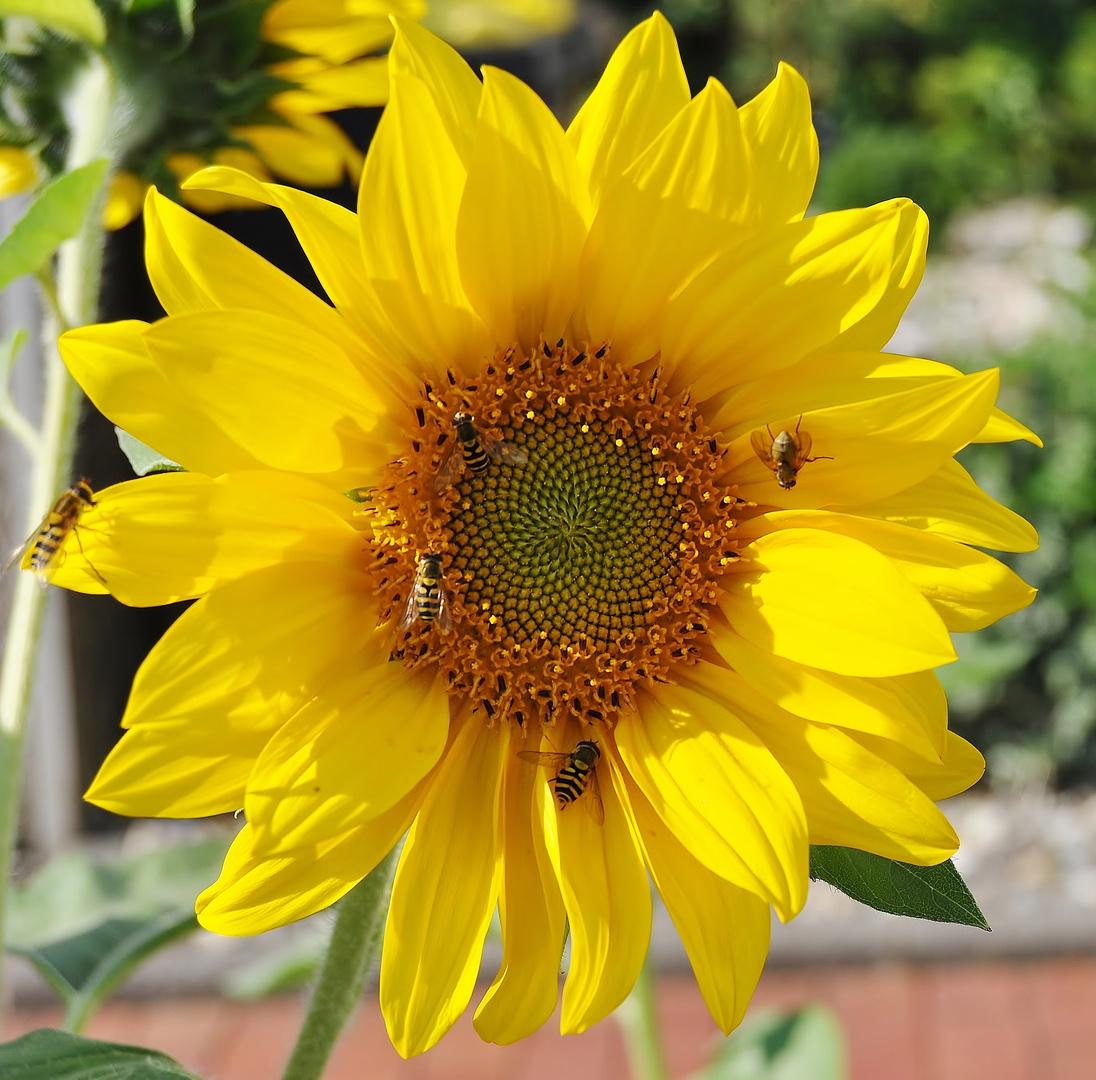 Insektentreiben in der Sonne