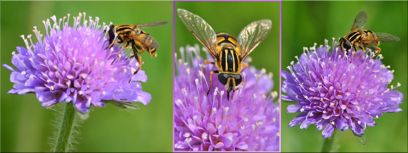 Insektenwelt 2)