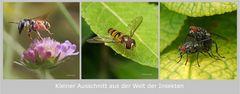 Insektenwelt