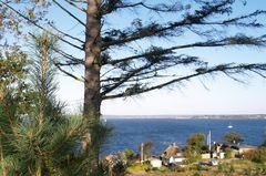 Insel Als - Kiefern mit Blick auf die Flensburger Börde