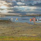 Insel Donna-Idylle nähe Sandnessjøen an der Fv17 (Norwegen)