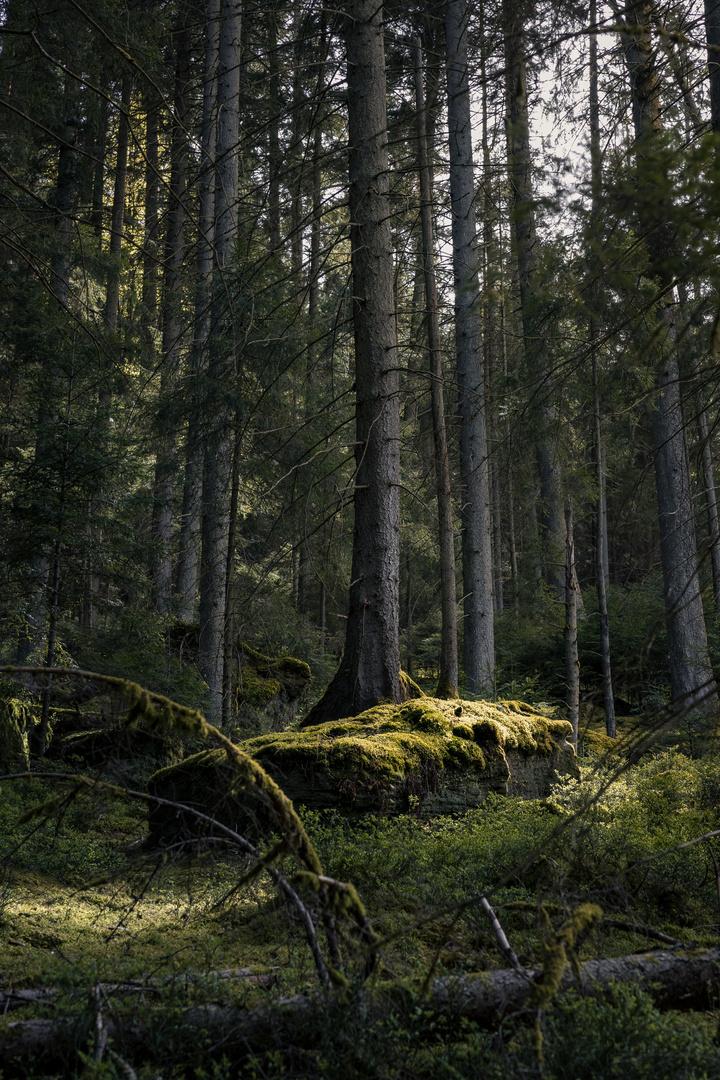 Insel im Wald II