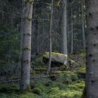 Insel im Wald III