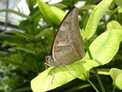 Insel Mainau am Bodensee - Schmetterlingshaus