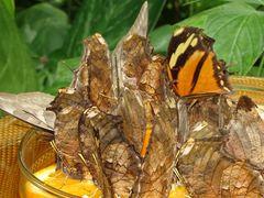 Insel Mainau - Schmetterlingshaus 02