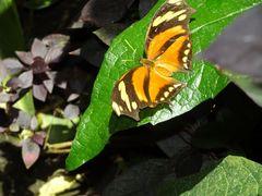 Insel Mainau - Schmetterlingshaus 03