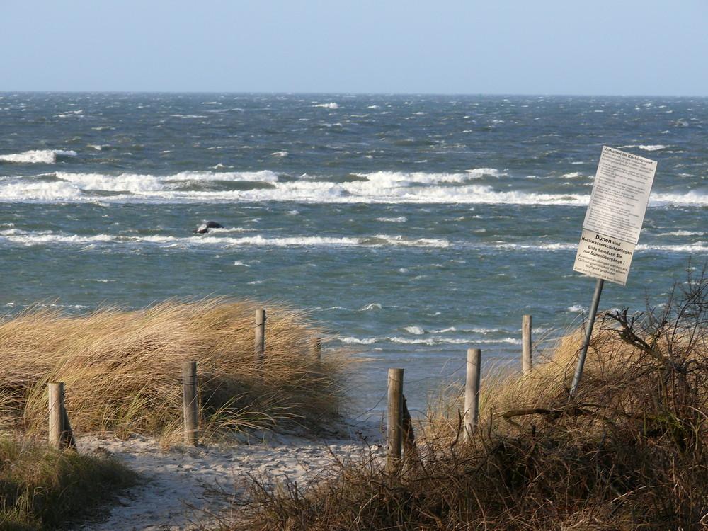 Insel Poel Schwarzer Busch Januar 2007 Foto Bild Deutschland