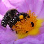 insetti 1/2009