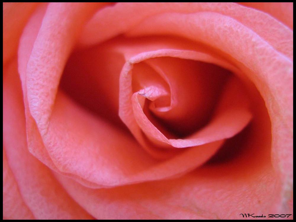 Inside of beauty