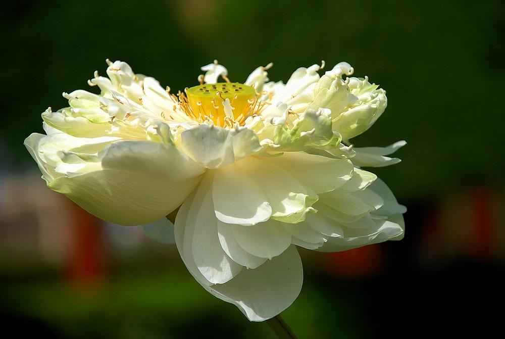 Inside of Lotus