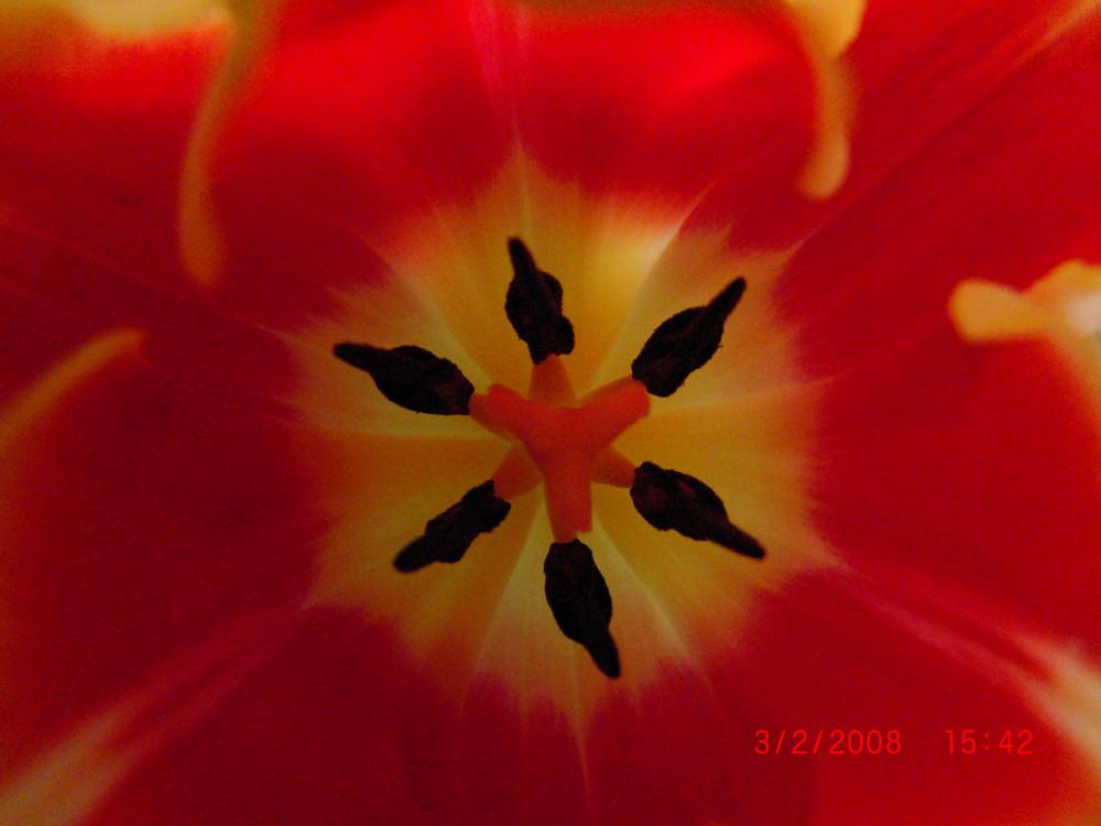 Inside Tulpe