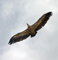 Insolvenz-Vogel