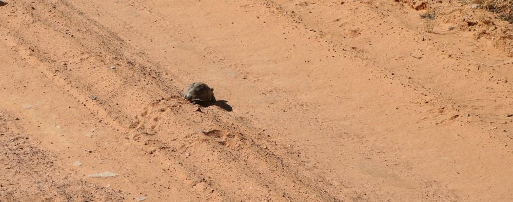 * intelligente Schildkröte *