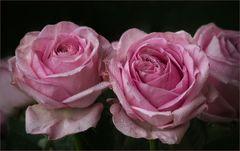 Intensives Rosé.....