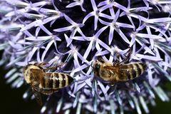 Interessant: Bienen regeln ....